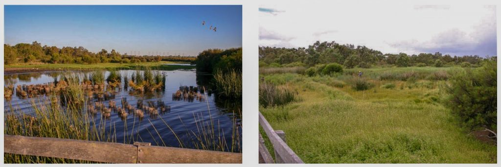Two pictures comparing seasonal water levels of Bibra Lake