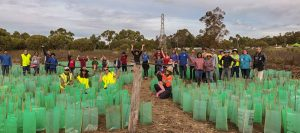 Community Planting Event at Horse Paddock Swamp in the Beeliar Wetlands